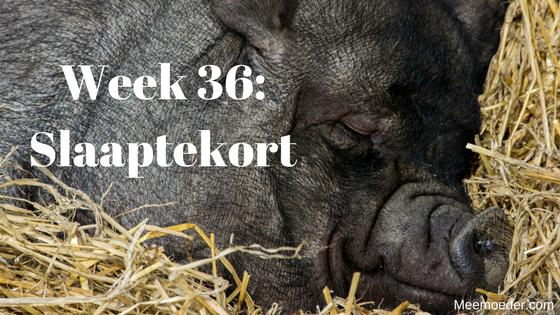 'Week 36: Slaaptekort' In week 36 heeft Sebastiaan last van een virus of van nieuwe tandjes. Zeker weten doen zijn mama's het niet. Wat ze wel zeker weten, is dat ze deze week last hebben van slaaptekort. Lees het op http://bit.ly/wk36st