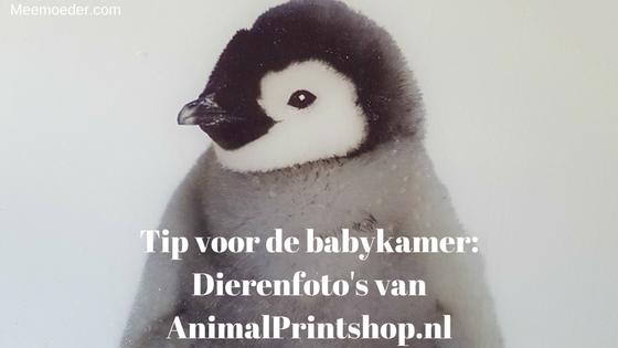 Zoek je een mooie dierenfoto op glas? AnimalPrintshop.nl is mijn tip! Ik vind een dierenfoto op glas een perfect genderneutraal of uniseks cadeau voor in de babykamer. Lees het snel op http://bit.ly/DFOGAP!